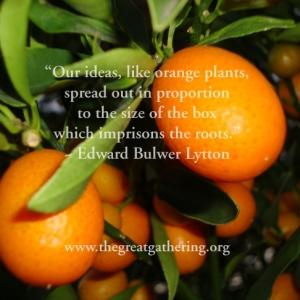 ideaslikeorangeplants